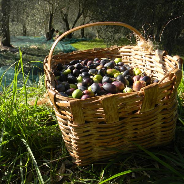 stoccaggio olive